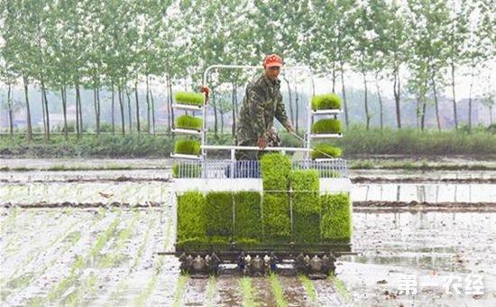 """甘肃武都县:科技已成为农民秋种秋播的""""新理念"""""""