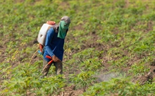 <b>全国掀起农药检查潮 多个农药品种价格持续上升</b>