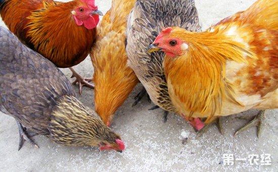 鸡隐孢子虫病的病因是什么?怎样诊断鸡隐孢子虫病?