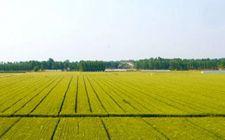 农业补贴向规模经营倾斜 个体农户明年还能拿到哪些补贴?