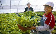 湖南永州市:有机盆栽蔬菜受市民青睐