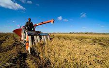 """吉林长春:加强农业品牌建设 加快由""""农业大市""""向""""农业强市""""转变"""