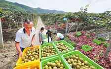 """十大行动实施方案成四川省向农业强省跨越的""""施工细图"""""""