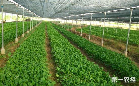 湖北宜昌市将创建十家优质蔬菜基地并授牌