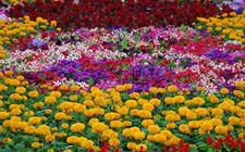 海南省下发《推进热带花卉产业发展实施方案》