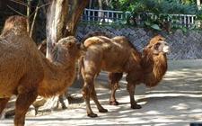 新疆霍城:特色养殖助力居马力脱贫致富