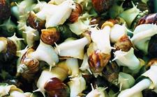 <b>白玉蜗牛要怎么养?白玉蜗牛的养殖技术有哪些呢?</b>