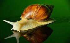 白玉蜗牛的生活特点是怎样的?白玉蜗牛的生活习性