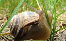 蜗牛的种类有哪些?蜗牛品种介绍