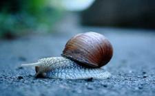 白玉蜗牛养殖怎么控制温度?白玉蜗牛温度控制技术
