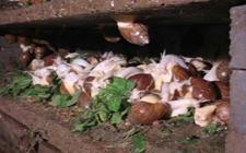 湿度对于白玉蜗牛养殖有什么影响吗?关于白玉蜗牛的养殖湿度