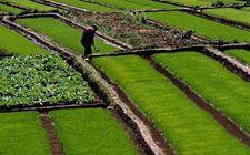 农村土地值多少钱?你又能赚多少?