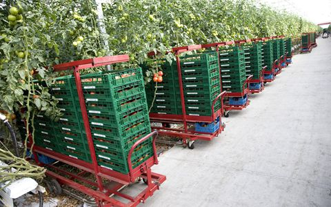 贵州:出台新举措 进一步推进绿色农产品冷链物流降本增效