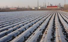 河南:大力推进农业节水工程建设 实现节水增产双赢