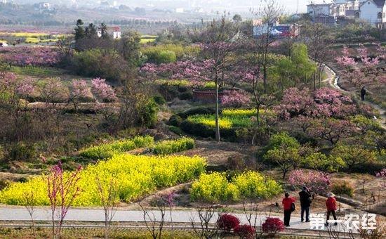 安徽芜湖:美丽乡村建设工程让乡村发生大变化