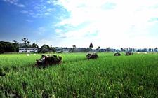 未来中国农业的大势在哪里?要抓住这些机会!