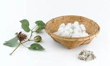国际棉花期货调整 芝加哥农产品期价下跌