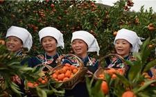 贵州惠水地方特色农产品——惠水牛肉红