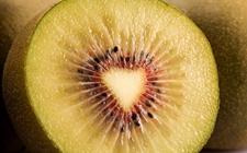 浙江龙泉:红心猕猴桃成就致富美好生活 年产值可达120多万元