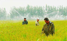 """上海:改变""""卖稻谷""""的局面 积极推进水稻供给侧改革"""