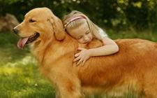 <b>怎么喂养老年犬?老年犬饮食上需要注意什么?</b>