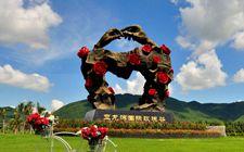 """海南大茅村:盐碱地里的玫瑰园开出""""小康花"""""""