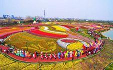江苏:今年以来创意休闲农业营收逾250亿元