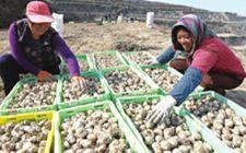 农业部:农业产业扶贫成就主要体现在六个方面