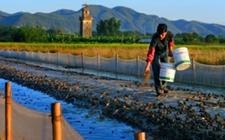 青蛙养殖:生态合法养殖是致富秘诀