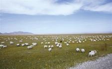 格木尔市开展全国草地生态畜牧业试验区建设试点工作