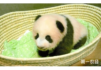 日本上野动物园全面禁烟:预计11月末前实现