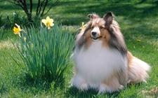 <b>如何给喜乐蒂制作狗咬胶?狗咬胶的制作方法</b>