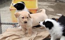 <b>宠物送洗需要注意什么?宠物送洗要注意的三大问题</b>