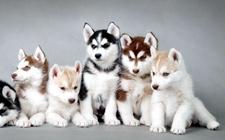 <b>狗狗爱叫怎么办?六招给你一个安静的狗狗</b>