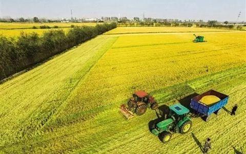 郑州出台《关于稳步推进农村集体产权制度改革的实施方案》