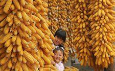 重庆2017年世界粮食日和爱粮节粮宣传周启动仪式在忠县举行