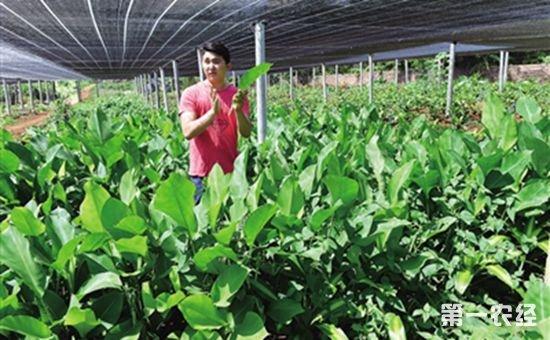 海口市蔬菜基地受损 将在15天内将抢种1万亩叶菜