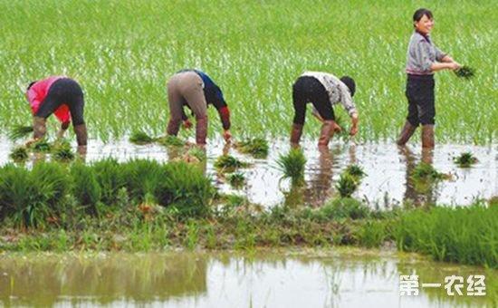 安徽:深入开展绿色增产模式攻关 优化秋种生产结构