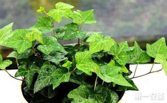 """9种常见的懒人盆栽植物介绍!""""植物杀手""""们再也不怕养死植物"""