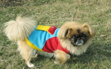 狗狗为什么会突然发抖?狗狗发抖的原因?