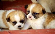 <b>怎么照顾刚出生的狗狗?如何照顾新生幼犬?</b>