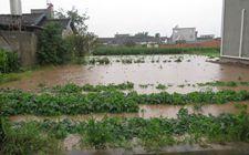 <b>四川、重庆部分地区发生洪涝灾害 经济损失达1600余万元</b>