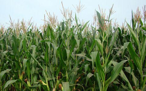 以下几项政策种粮者及种粮大县要重点关注!