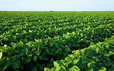 黑龙江2017年玉米和大豆生产者补贴资金发放工作正式启动