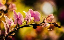第28届中国兰花博览会将于明年3月23日至4月7日在广东翁源举办