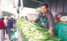 80后村官周强:助农解决蔬菜销路问题 带领农户增收致富
