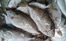 广东省食药监局:慎食深海鱼 远离雪卡毒素