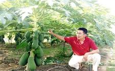 <b>台式农场入厦开拓休闲农业市场 三种模式打造休闲农业</b>