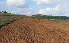 农业部:农村土地确权登记颁证正有序推进