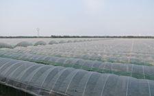 云南出台《关于推进现代农业产业园建设的指导意见》